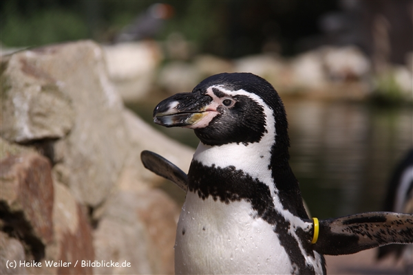 Zoo-Rheine-120909IMG_2934