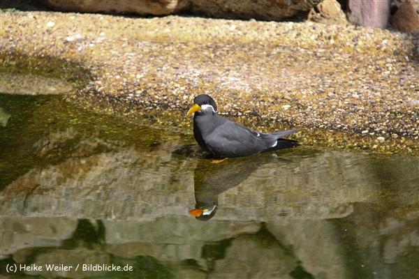 Zoo-Rheine-120909IMG_3019