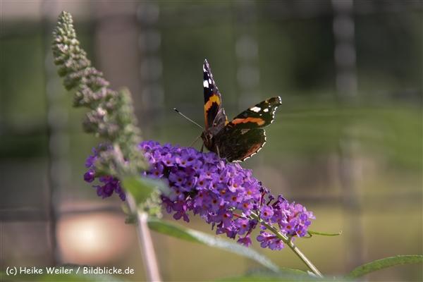 Zoo-Rheine-120909IMG_3086
