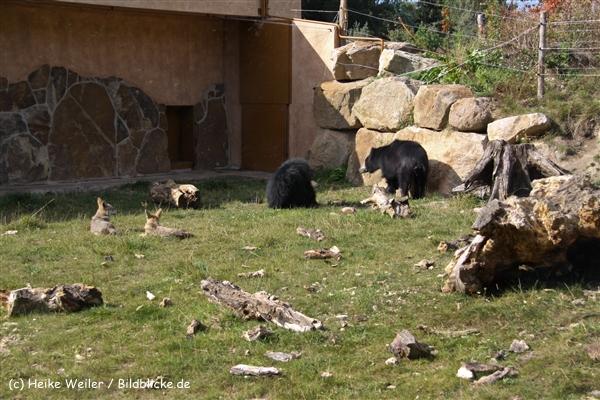 Zoo-Rheine-120909IMG_3089