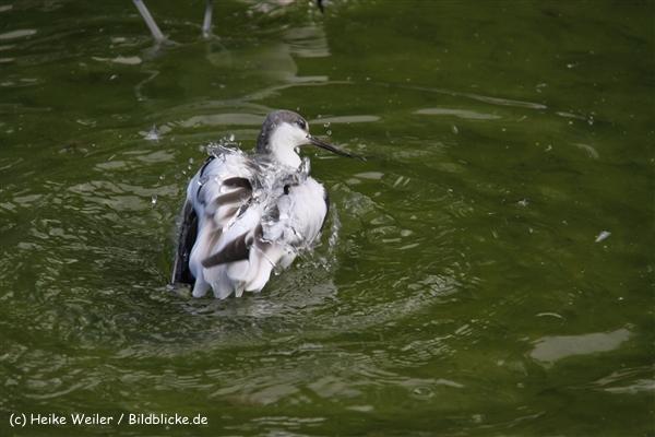 Zoo-Rheine-120909IMG_3151