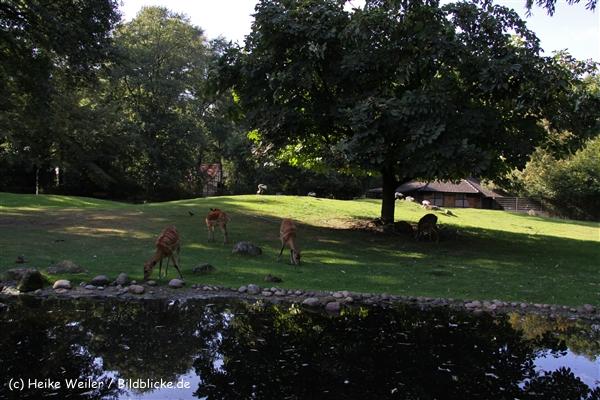Zoo-Rheine-120909IMG_3180