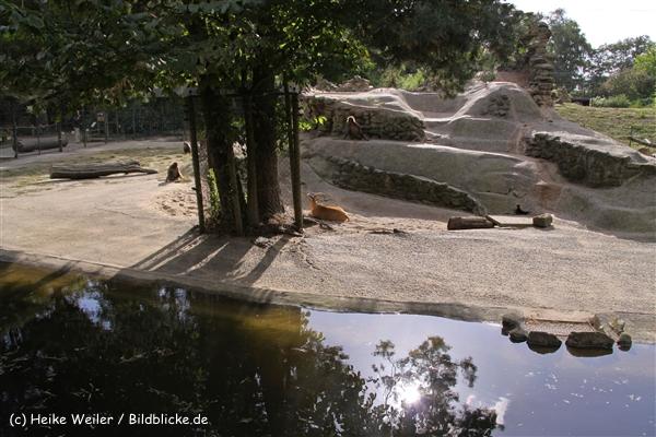 Zoo-Rheine-120909IMG_3206