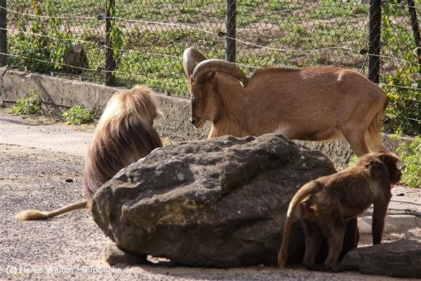 Zoo-Rheine-120909IMG_3209
