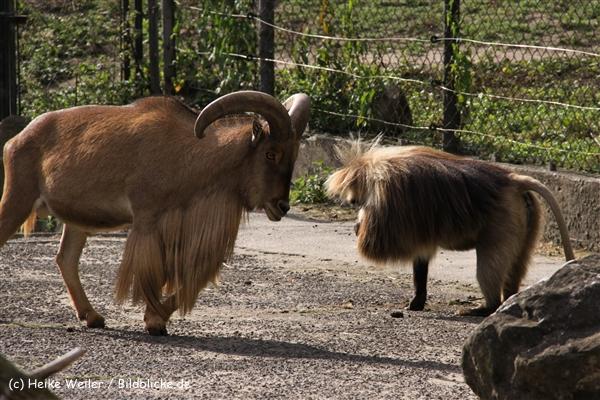 Zoo-Rheine-120909IMG_3216
