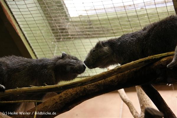 Zoo-Rheine-120909IMG_3235