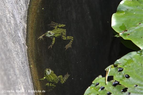 Zoo-Rheine-120909IMG_3263