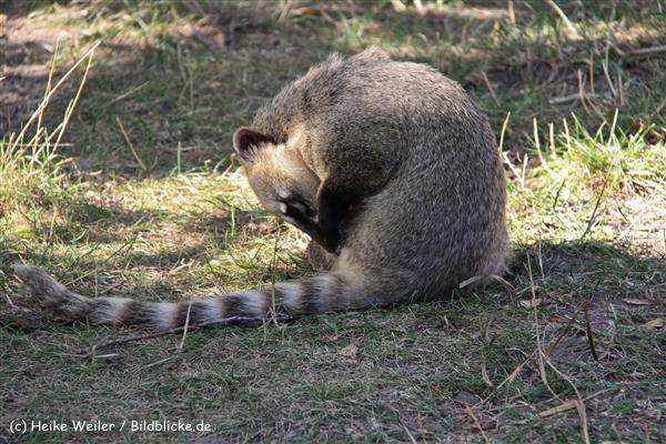 Zoo-Rheine-120909IMG_3283
