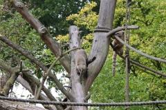 Zoo-Rheine-120909IMG_2185