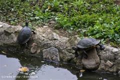 Zoo-Rheine-120909IMG_2199