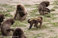 Zoo-Rheine-120909IMG_2215