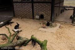 Zoo-Rheine-120909IMG_2260