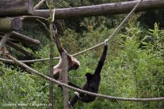Zoo-Rheine-120909IMG_2275