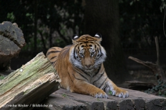 Zoo-Rheine-120909IMG_2341