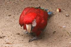 Zoo-Rheine-120909IMG_2477
