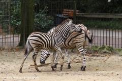 Zoo-Rheine-120909IMG_2495