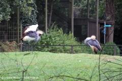 Zoo-Rheine-120909IMG_2511