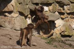 Zoo-Rheine-180410-IMG_19980