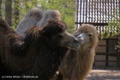 Zoo-Rheine-180410-IMG_20056