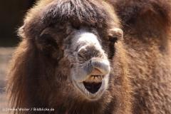 Zoo-Rheine-180410-IMG_20062