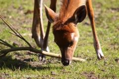 Zoo-Rheine-180410-IMG_20069
