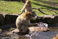 Zoo-Rheine-180410-IMG_20111