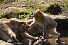 Zoo-Rheine-180410-IMG_20117