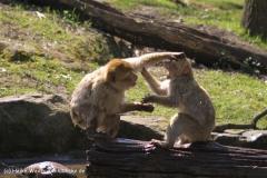 Zoo-Rheine-180410-IMG_20174