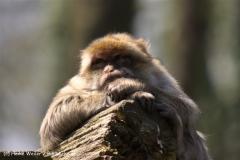 Zoo-Rheine-180410-IMG_20193