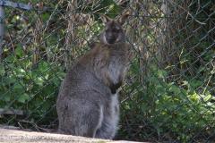 Zoo-Rheine-180410-IMG_20264