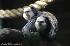 Zoo_Rheine_260712_IMG_8409