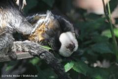 Zoo_Rheine_260712_IMG_8417