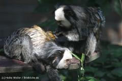 Zoo_Rheine_260712_IMG_8422