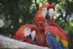 Zoo_Rheine_260712_IMG_8430
