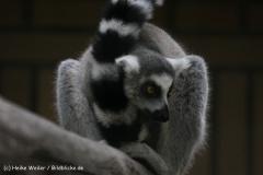 Zoo_Rheine_260712_IMG_8461