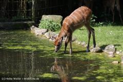 Zoo_Rheine_260712_IMG_8471