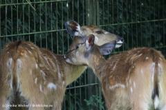 Zoo_Rheine_260712_IMG_8482