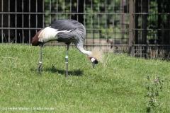 Zoo_Rheine_260712_IMG_8498