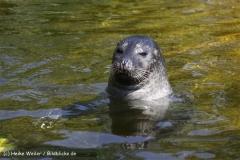 Zoo_Rheine_260712_IMG_8517