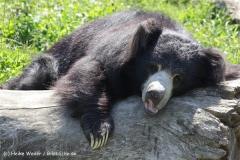 Zoo_Rheine_260712_IMG_8546