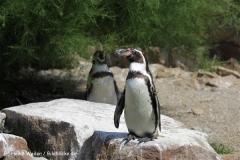 Zoo_Rheine_260712_IMG_8577