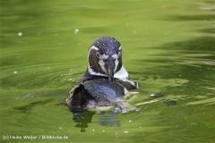 Zoo_Rheine_260712_IMG_8594