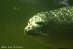 Zoo_Rheine_260712_IMG_8653