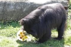 Zoo_Rheine_260712_IMG_8666