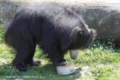 Zoo_Rheine_260712_IMG_8670