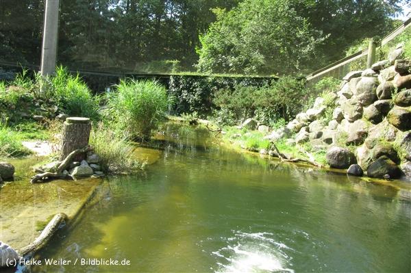 Zoo_Rostock_310712_008_IMG_6249