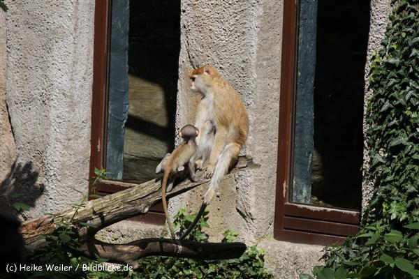 Zoo_Rostock_310712_050