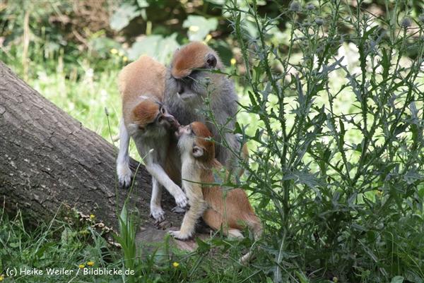 Zoo_Rostock_310712_061