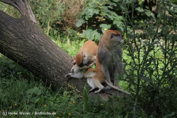 Zoo_Rostock_310712_065