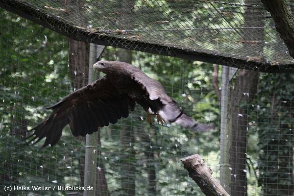 Zoo_Rostock_310712_106